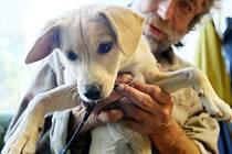 INJEKCE A TABLETA čekaly na všechny psy bezdomovců v nízkoprahovém centru Naděje, noclehárně v Kateřinkách, ubytovnách a městských sociálních bytech nebo v táboře bezdomovců v lese mezi Františkovem a letištěm v Růžodole.