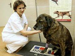 VÁŽENÍ JE základním úkonem se zvířetem v ordinaci. Na snímku z liberecké kliniky NISA veterinární lékařka Zuzana Odleváková.