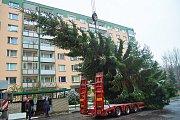 Kácení vánočního stromu na Broumovské v Liberci.