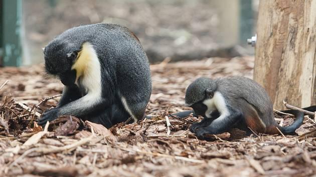 Zoo Liberec, ilustrační foto.