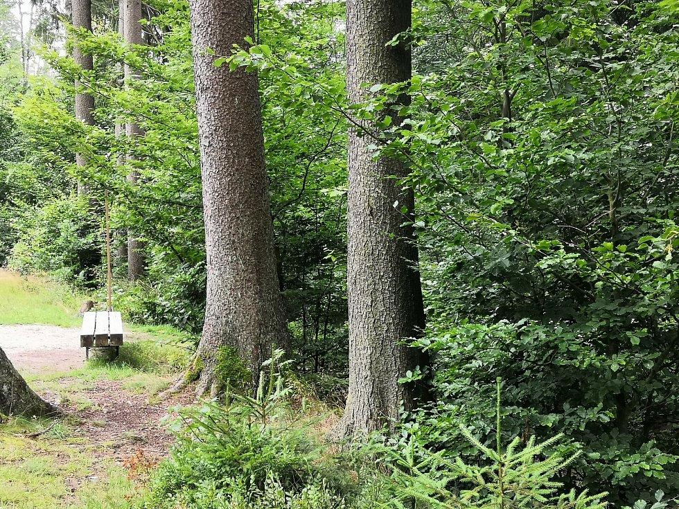 Tichá stezka vede od liberecké zoo k lesnímu koupališti.