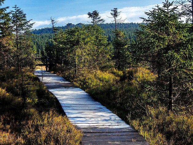 Jizersko-ještědský horský spolek a Nadace Ivana Dejmala pro ochranu přírody spojily síly a snaží se obnovit Jizerské smrčiny.