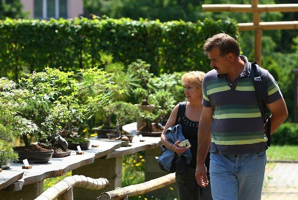 Po roce se do liberecké Botanické zahrady vrací výstava Bonsaje a suiseki. K vidění je sto exponátů pokojových i venkovních bonsají