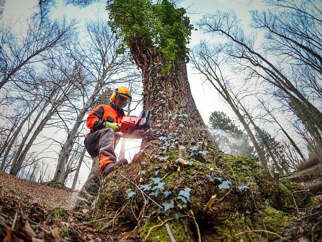 DO KONCE BŘEZNA má ze zámeckého parku zmizet skoro 700 náletových dřevin. Park má získat původní podobu.