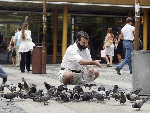 Při krmení holubů není leccos vidět.