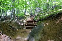 OPRAVENOU STEZKOU se do Oldřichovských bučin dostanou návštěvníci bezpečněji a pohodlněji. Bohatší opatření navíc chrání svahy proti erozi.