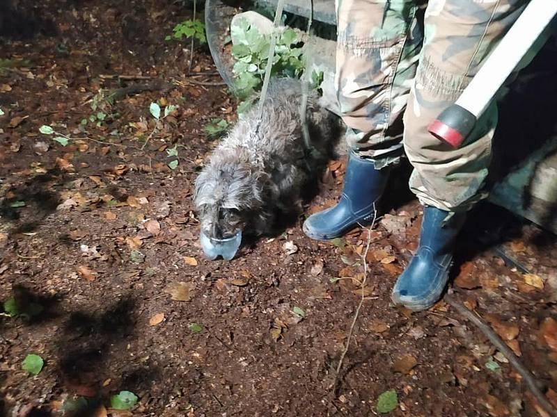 Hasiči zachraňovali psa v Oldřichově. Byl zaklíněný ve skále.