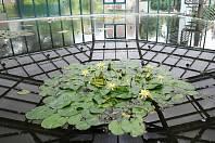 PAVILONEM LEKNÍNŮ se od úterý chlubí Botanická zahrada v Liberci.