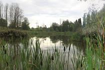 Mokřady patří mezi nejohroženější ekosystémy na celém světe.