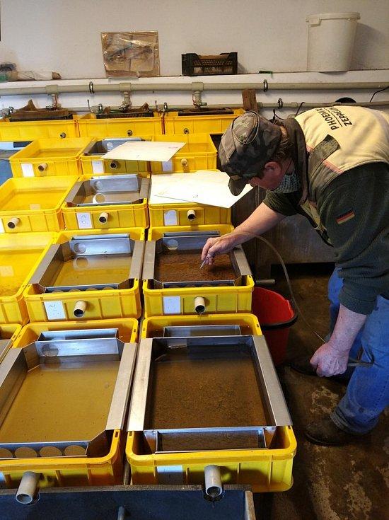 Ochranáři použili speciální box na inkubaci jiker pstruha.