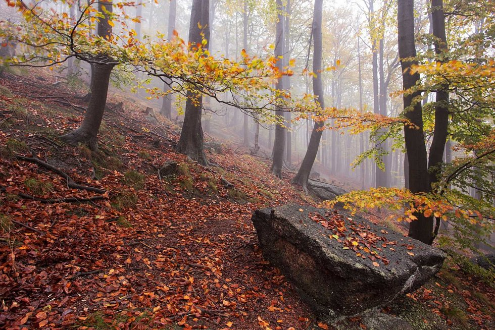 Mlhavé odpoledne