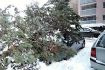 Hasiče v Libereckém kraji stále zaměstnávají pády stromů.