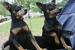 Soutěžní výstavu psích plemen připravili na zahradě v Lidových Sadech v Liberci.
