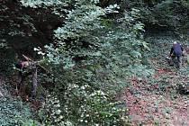 Nekonečný příběh; to je náletovými dřevinami zanesený dlouhý strmý sráz v lesoparku Jedličkova ústavu v Liberci.