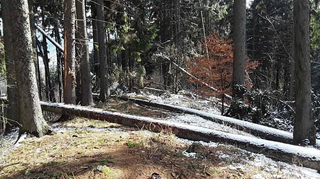 Popadané stromy. Ilustrační fotografie.
