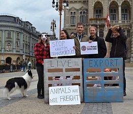 Na středu 13. září 2017 připadl Mezinárodní den STOP přepravě zvířat