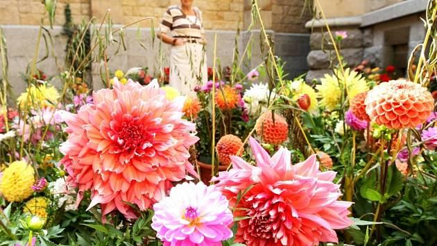 Krásu a pestrost jiřin mohou nyní obdivovat lidé v Severočeském muzeu.