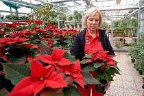 Vánoční hvězdy a dekorace na Střední odborné škole Liberec