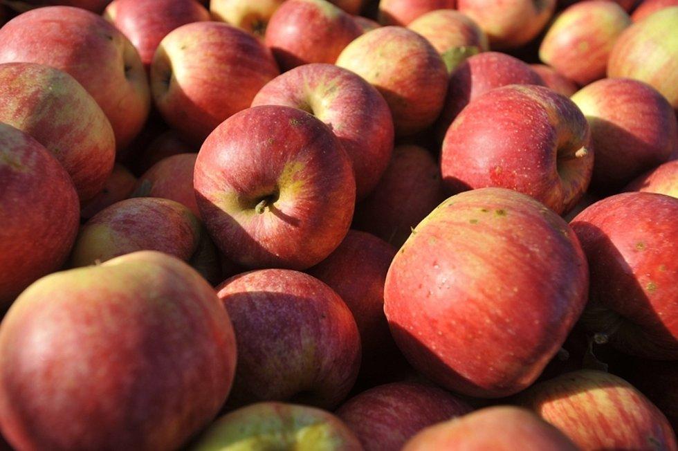 Jablka. Ilustrační foto.