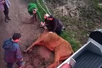 Dobrovolní hasiči v Novém Městě pod Smrkem zachraňovali koně