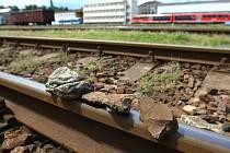 PŘEKÁŽKY NA KOLEJÍCH působí ročně škody za desítky milionů korun.