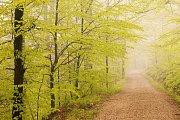 """Lesní cesta """"Kozí"""""""