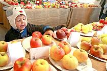 Až do této soboty si mohou přijít lidé do Obecního domu ve Stráži nad Nisou prohlédnout, jakým druhům jablek, ale i třeba cuketám, okurkám nebo dýním se daří v Libereckém kraji.