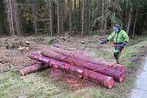 Lesníci ošetřují dříví proti kůrovcům. Na obarvené kmeny nesahejte!