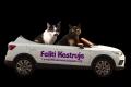 Opuštěné kočky nakrmí díky novému autu