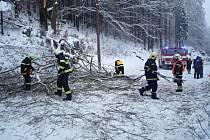 Spadlý strom přes cestu.