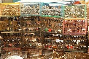 Ptačí trh na Sumatře.