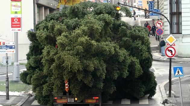 Vánoční strom na cestě na náměstí.