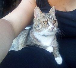 Kočka Amálka