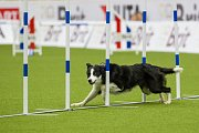Mistrovství světa v agility začalo 5. října v Home Credit areně v Liberci, pokračovat bude až do neděle 8. října. Na snímku je disciplína jumping družstev s velkými psy.