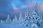 Zimní podvečer.