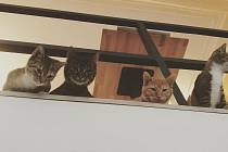 Kočičí kavárna v Liberci.