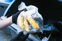 POTRAVINY Z POPELNICE. Při prvním dumpster divingu jsme našli několik kilogramů ovoce a zeleniny.