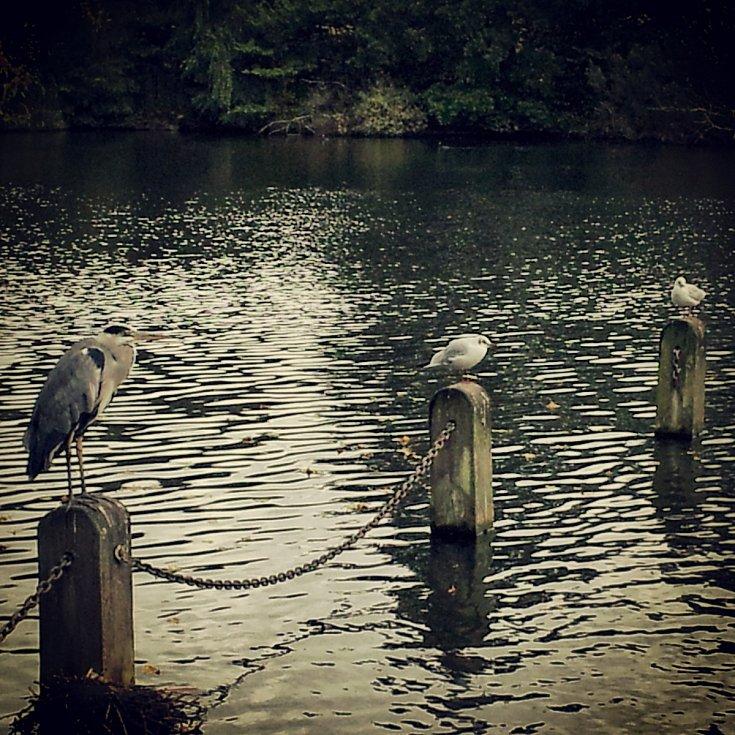 Kensingtonské zahrady, Londýn.