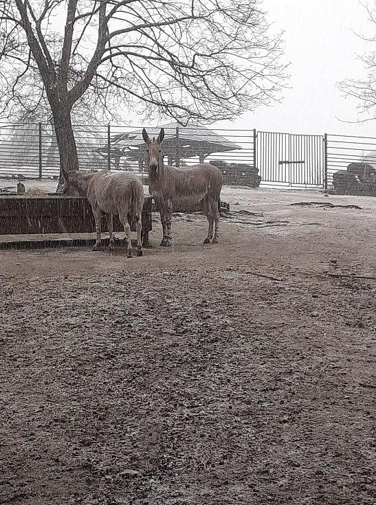 Liberecká zoo znovu otevřela své brány a uvítala první návštěvníky.