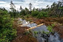 Výsadba původních dřevin a budování přehrážek přispívá k obnově krajiny.