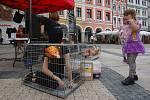 Hnutí OBRAZ upozorňovalo na špatné podmínky v klecových chovech na libereckém náměstí