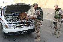 PSOVODI Z GRABŠTEJNA. V Iráku kontrolují vozidla.