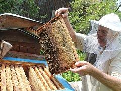 ZIMA BEZ MEDU čeká letos řadu domácností. Medu bude kvůli špatnému počasí letos pomálu v celé republice.