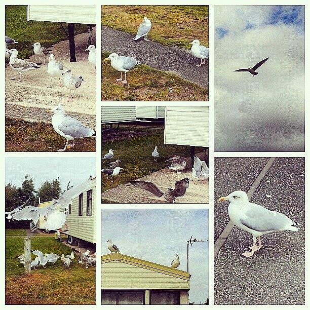 Presthaven, severní Wales.