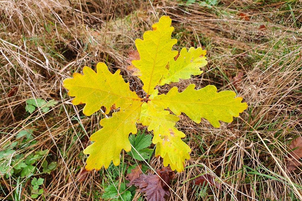 Barvy podzimu a jeho nálady.
