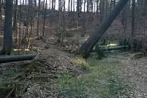 Padlý strom nad přehradou.