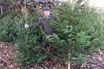 Podnik Lesy ČR si pro letošní rok připravil projekt Vánoční stromky do nemocnic