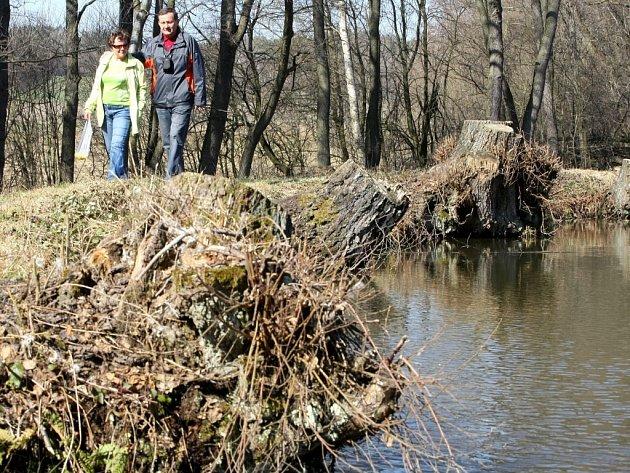 Jenišovský rybník napájený pramenem Ploučnice bude v první etapě protipovodňových opatření vyčištěn.