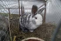 Výstavu králíků, drůbeže a holubů ve Vísce nezastavil ani déšť