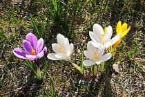 Květinová výsadba v Liberci.